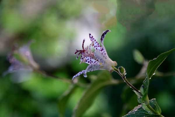 庭の花_c0404426_16110807.jpg