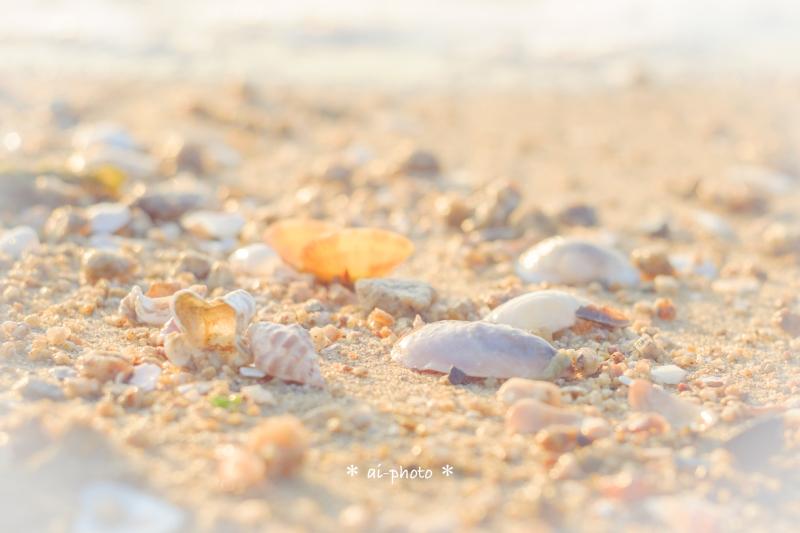 貝殻ひろい。_b0304227_23311163.jpg