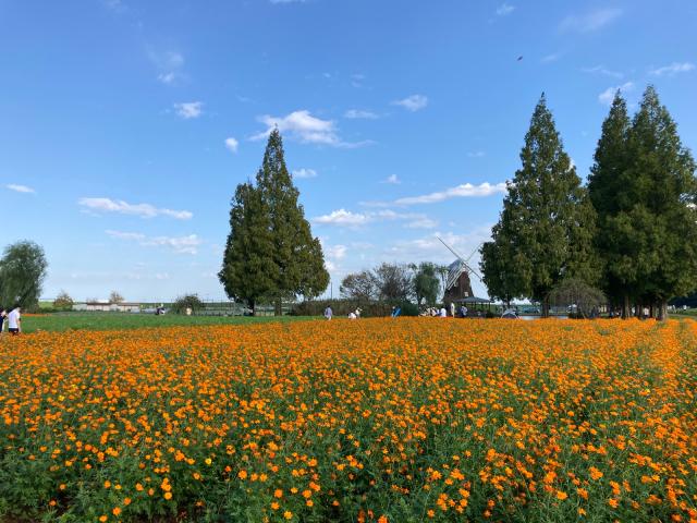 秋の花といえば、秋桜。_b0134055_23284804.jpg