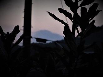 朝焼けに出現した幻の山_e0175370_07391591.jpg