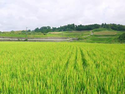 菊池水源棚田米 令和3年度の稲刈り終了!まもなく新米の販売開始!水にこだわる匠のお米を数量限定販売!_a0254656_17591873.jpg