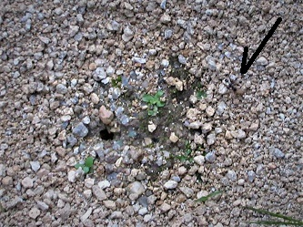 突然出現した砂のサークルは…_e0175370_07062459.jpg