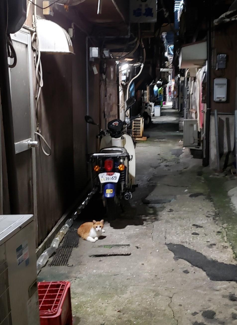 幻の猫ちゃんを探して_c0193077_15225642.jpg