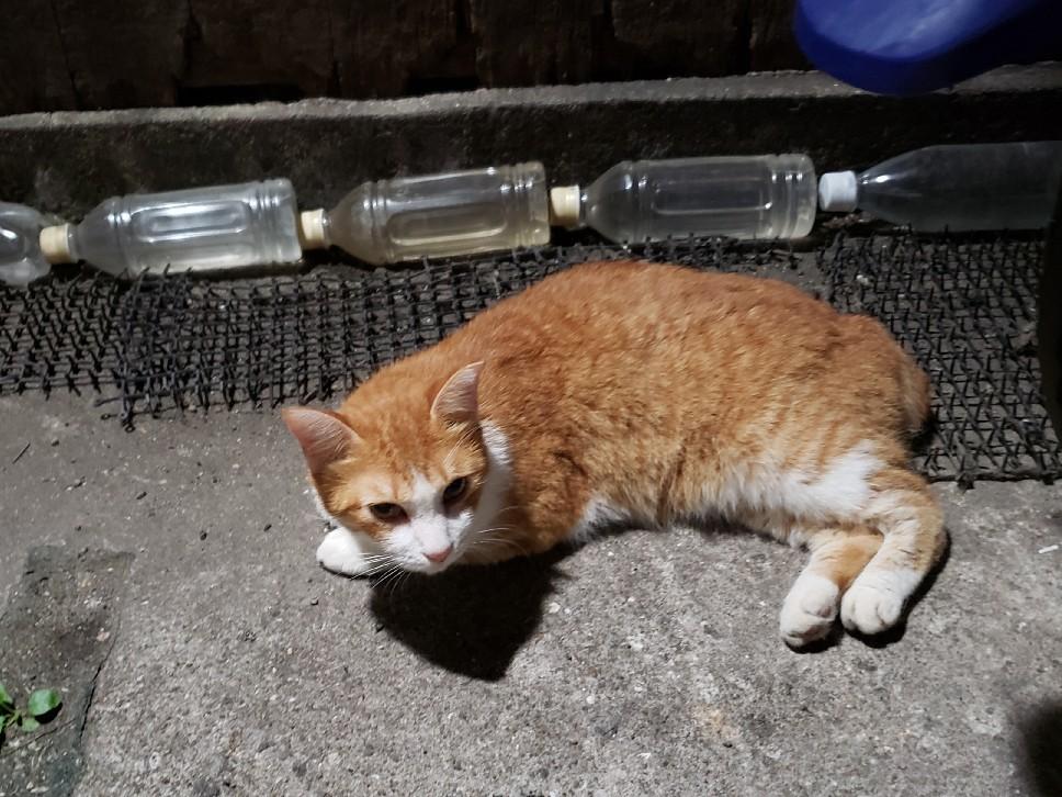 幻の猫ちゃんを探して_c0193077_15225718.jpg