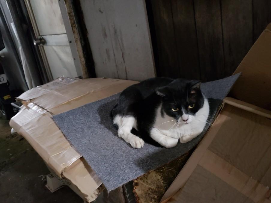幻の猫ちゃんを探して_c0193077_15225745.jpg