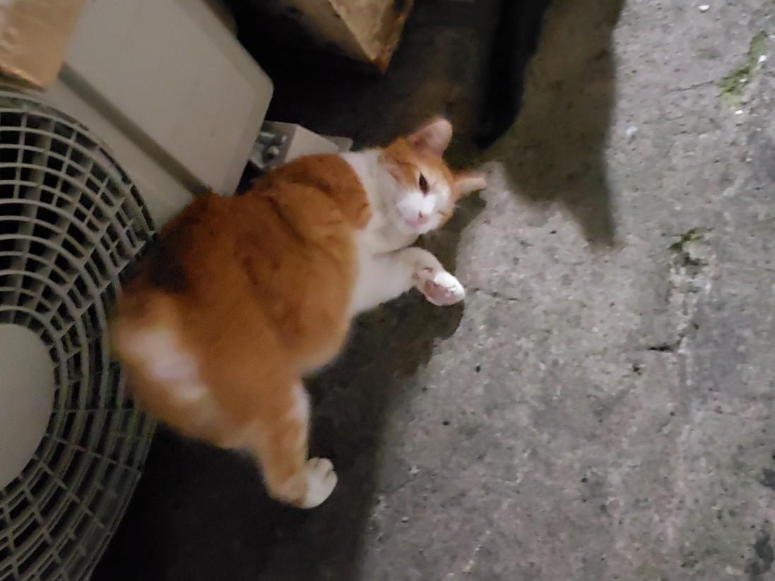 幻の猫ちゃんを探して_c0193077_15232301.jpg