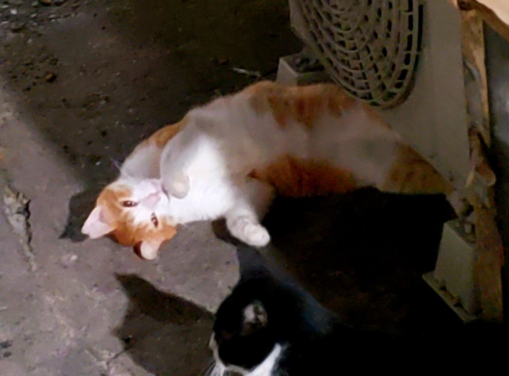 幻の猫ちゃんを探して_c0193077_15232359.jpg