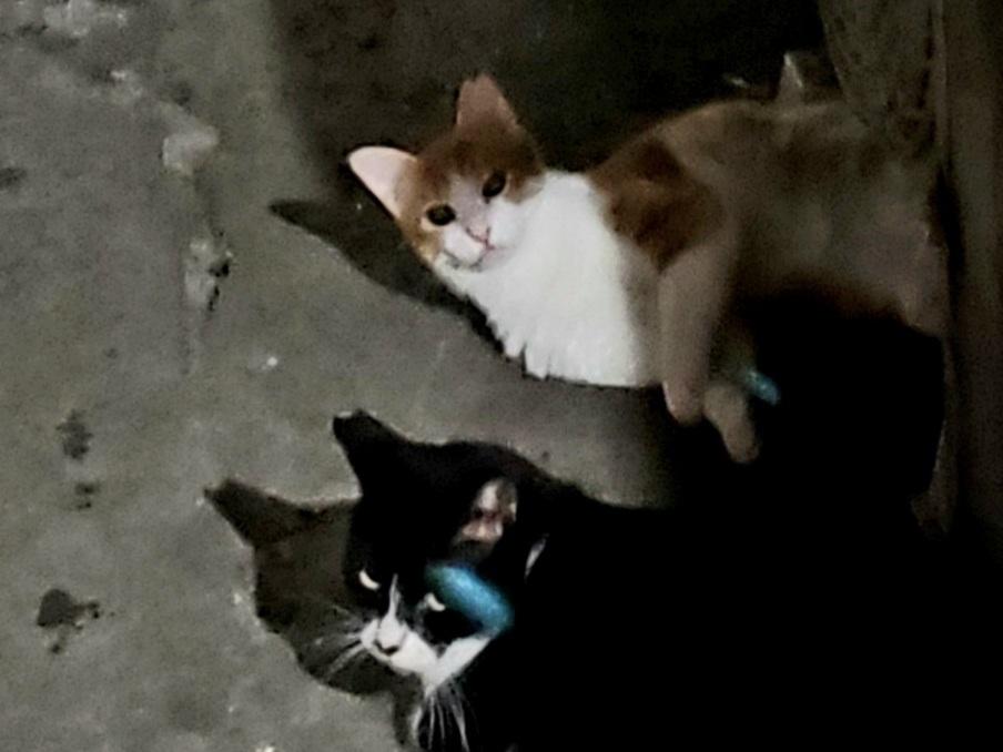 幻の猫ちゃんを探して_c0193077_15232489.jpg