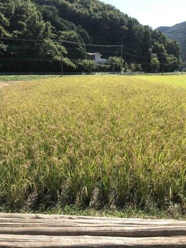 第17回 米酒の会 #3 【稲刈り】2021年10月3日_d0171387_07231012.jpg