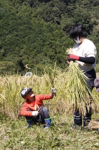 第17回 米酒の会 #3 【稲刈り】2021年10月3日_d0171387_07232707.jpg