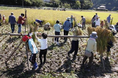 第17回 米酒の会 #3 【稲刈り】2021年10月3日_d0171387_07240077.jpg