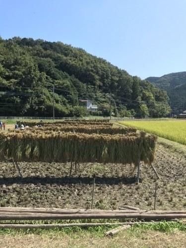第17回 米酒の会 #3 【稲刈り】2021年10月3日_d0171387_07240311.jpg