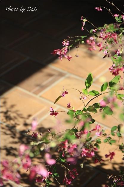 夏日といえども秋の花。_b0311208_16505326.jpg