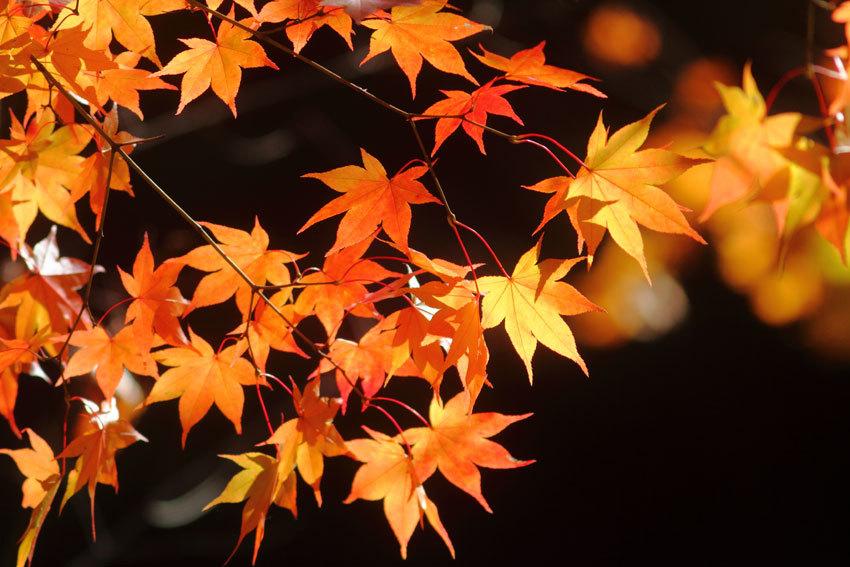 """10月11日""""錦仙峡""""_d0069235_12263540.jpg"""