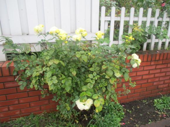 飾ったお花と煮て置いたお林檎で作ったアップルパイ_a0279743_19185595.jpg