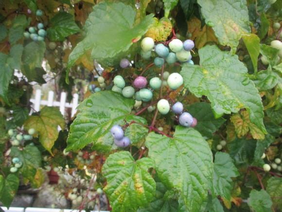 飾ったお花と煮て置いたお林檎で作ったアップルパイ_a0279743_19200394.jpg