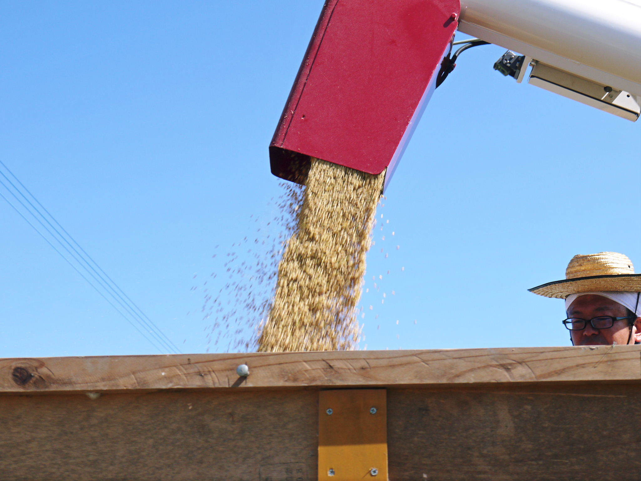 無農薬の『雑穀米』『発芽玄米』『米粉(微細粒米粉)』大好評販売中 稲刈りの様子を現地取材(2021)_a0254656_18572958.jpg