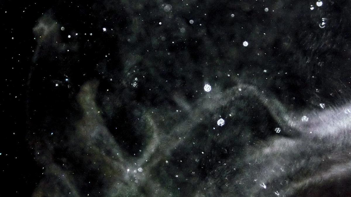 もうすぐ冬の星座になりますね_c0331825_17001154.jpg