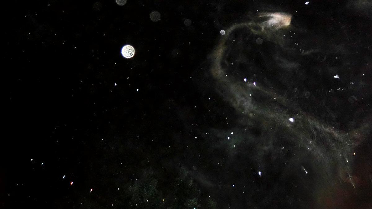 もうすぐ冬の星座になりますね_c0331825_17380567.jpg