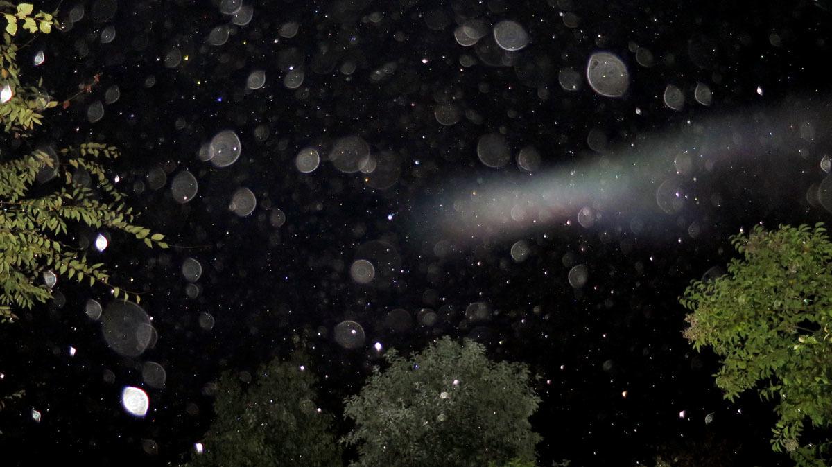 もうすぐ冬の星座になりますね_c0331825_17464143.jpg