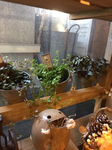 SALEと入荷のお知らせ~ガーデン雑貨販売と外構工事の広島市佐伯区楽樹工房_f0205854_12403877.jpg