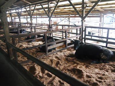 熊本県産黒毛和牛100%のハンバーグステーキ!令和3年10月は21日に出荷!数量限定!まもなく締切です!_a0254656_18215160.jpg