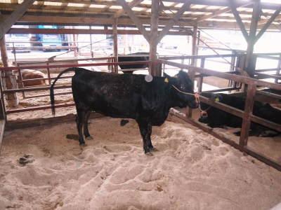 熊本県産黒毛和牛100%のハンバーグステーキ!令和3年10月は21日に出荷!数量限定!まもなく締切です!_a0254656_18231374.jpg