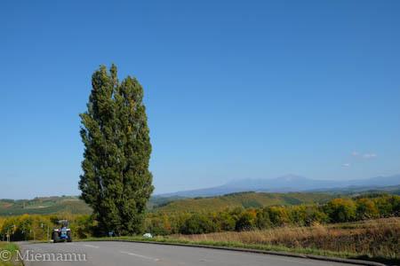 秋の【ケンとメリーの木】~10月の美瑛_d0340565_20265047.jpg