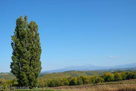 秋の【ケンとメリーの木】~10月の美瑛_d0340565_20265668.jpg