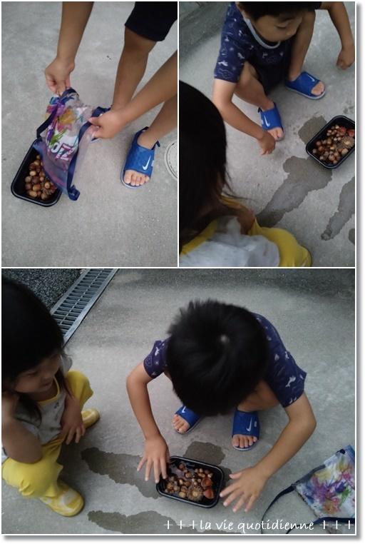 【今週の常備菜】幼児が食べにくい豆苗の調理法☆と持ち帰ったドングリの虫対策!_a0348473_06452676.jpg