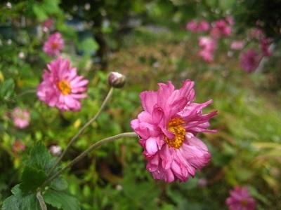 夏のなごりと秋の庭_c0289473_12352100.jpg
