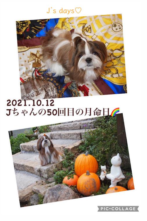 50回目の月命日と素敵なガーデン♡_a0198883_14504513.jpg