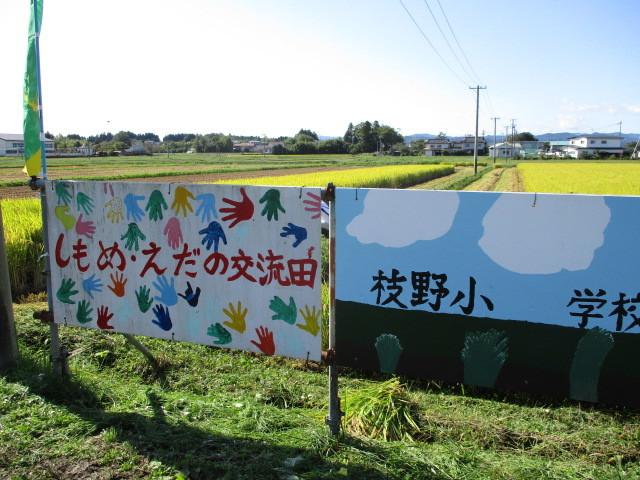 稲刈について(下目黒小・枝野小)_d0247484_11222039.jpg