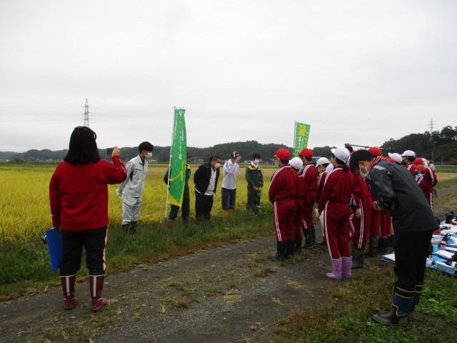 稲刈りについて(緑ヶ丘小・北郷小)_d0247484_13290205.jpg
