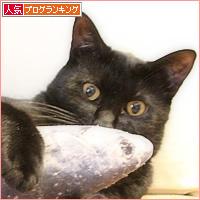 魚のさばき方_a0389088_16385900.jpg
