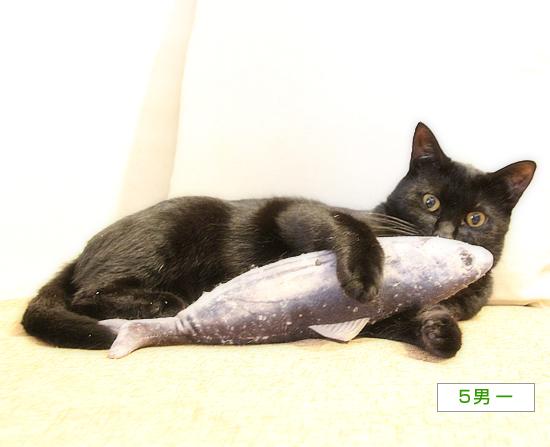 魚のさばき方_a0389088_16385923.jpg