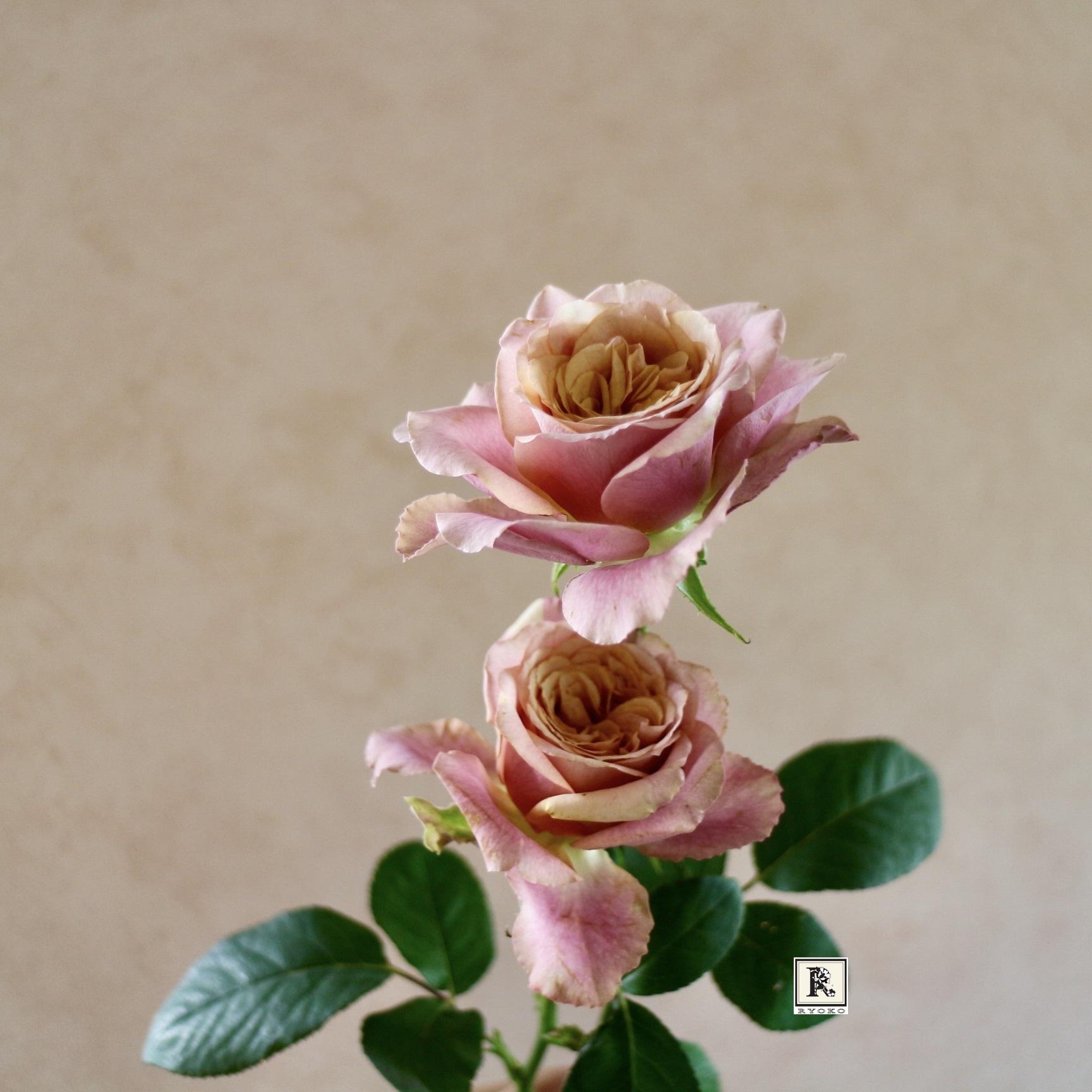 今月も連載おうちにお花を飾る を掲載いただいています_c0128489_12042565.jpeg