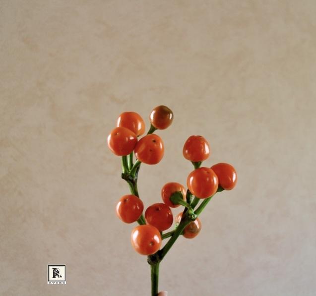 今月も連載おうちにお花を飾る を掲載いただいています_c0128489_12043659.jpeg