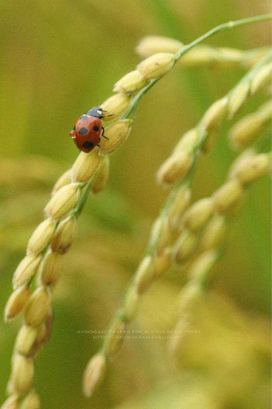 Fruitful autumn_d0145990_20430913.jpg