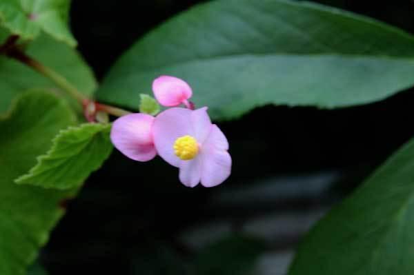 庭の花_c0404426_17085695.jpg