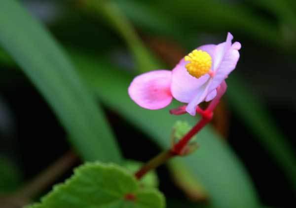 庭の花_c0404426_17091130.jpg