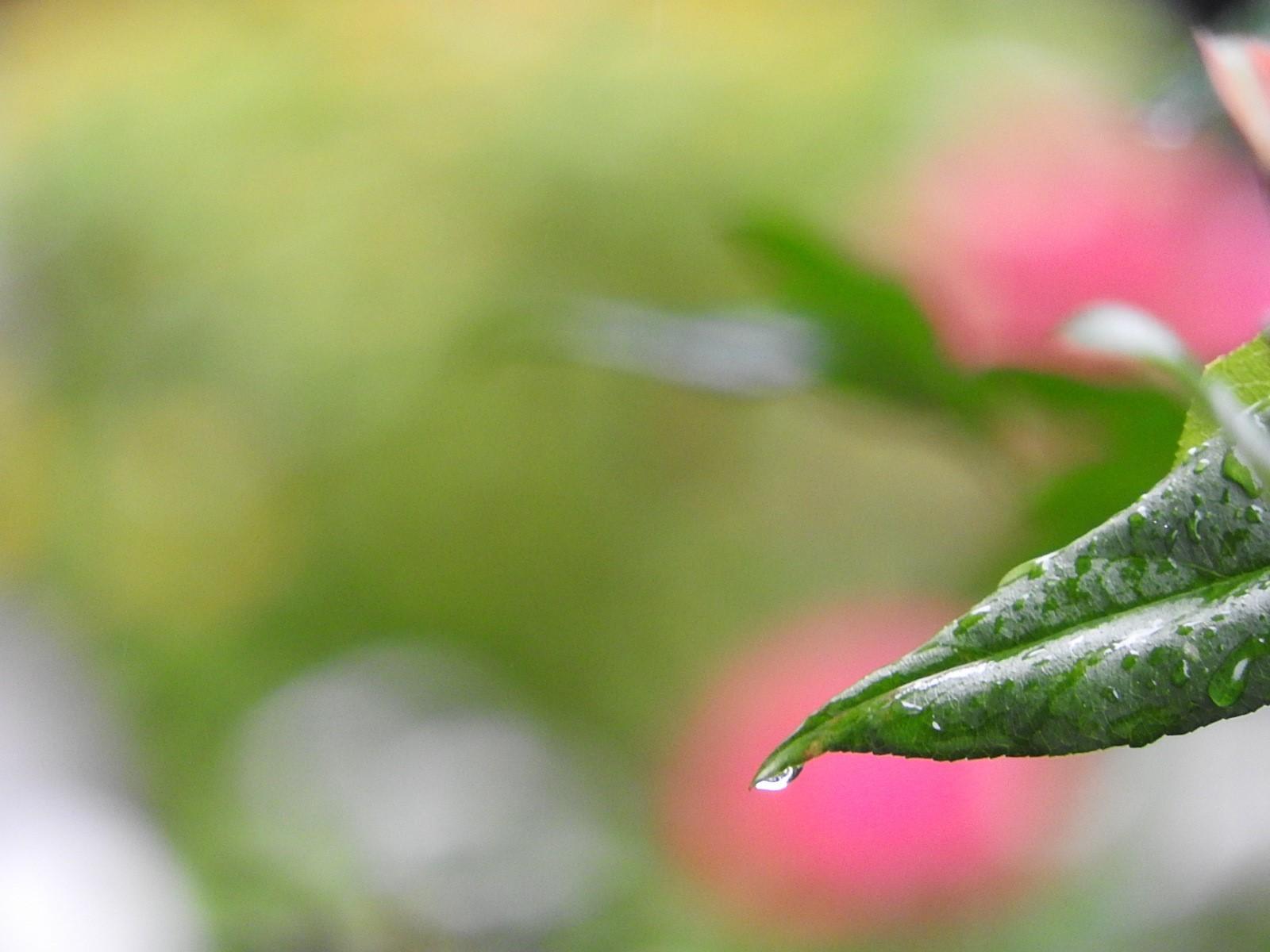 ざんざん降りの雨の中に_e0406450_09234593.jpg