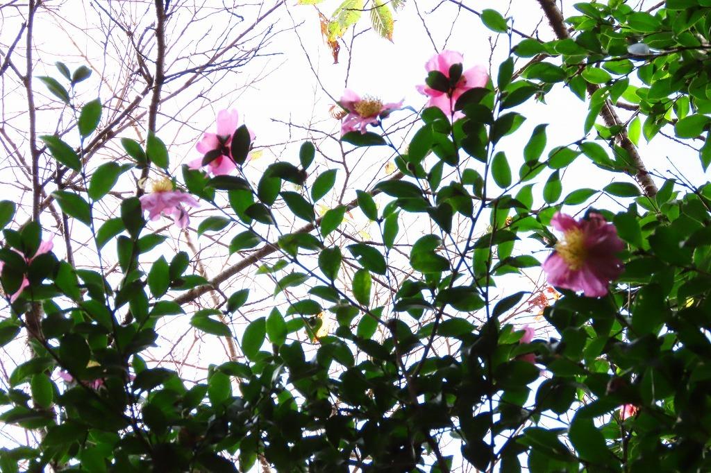 コゲラなど、朝散歩で出会ったいろいろ_b0236251_13204697.jpg