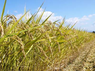 七城米 長尾農園 美しすぎる田んぼの稲刈り(2021) 新米の出荷は10月下旬からの予定です!(前編) _a0254656_19144303.jpg