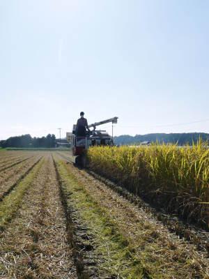 七城米 長尾農園 美しすぎる田んぼの稲刈り(2021) 新米の出荷は10月下旬からの予定です!(前編) _a0254656_19294568.jpg