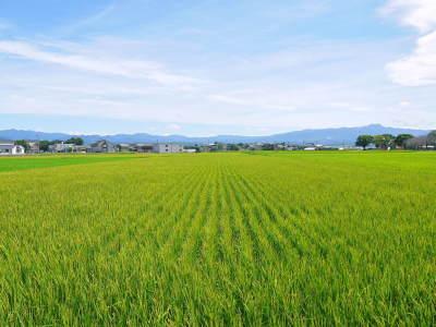 七城米 長尾農園 美しすぎる田んぼの稲刈り(2021) 新米の出荷は10月下旬からの予定です!(前編) _a0254656_19344245.jpg