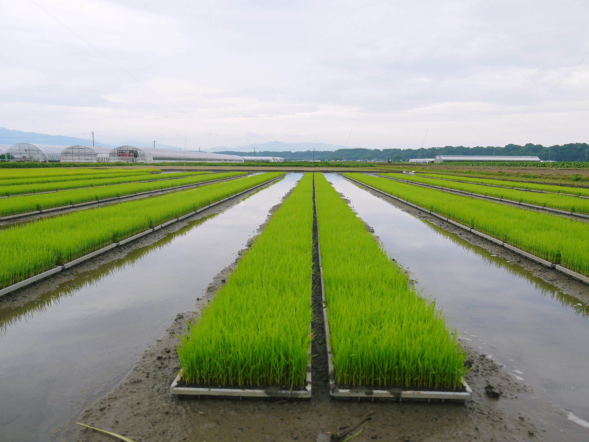 七城米 長尾農園 美しすぎる田んぼの稲刈り(2021) 新米の出荷は10月下旬からの予定です!(前編) _a0254656_19454056.jpg