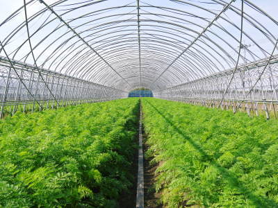 七城米 長尾農園 美しすぎる田んぼの稲刈り(2021) 新米の出荷は10月下旬からの予定です!(前編) _a0254656_19500115.jpg