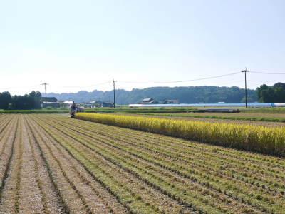 七城米 長尾農園 美しすぎる田んぼの稲刈り(2021) 新米の出荷は10月下旬からの予定です!(前編) _a0254656_19554216.jpg