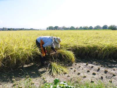 七城米 長尾農園 美しすぎる田んぼの稲刈り(2021) 新米の出荷は10月下旬からの予定です!(前編) _a0254656_19595595.jpg